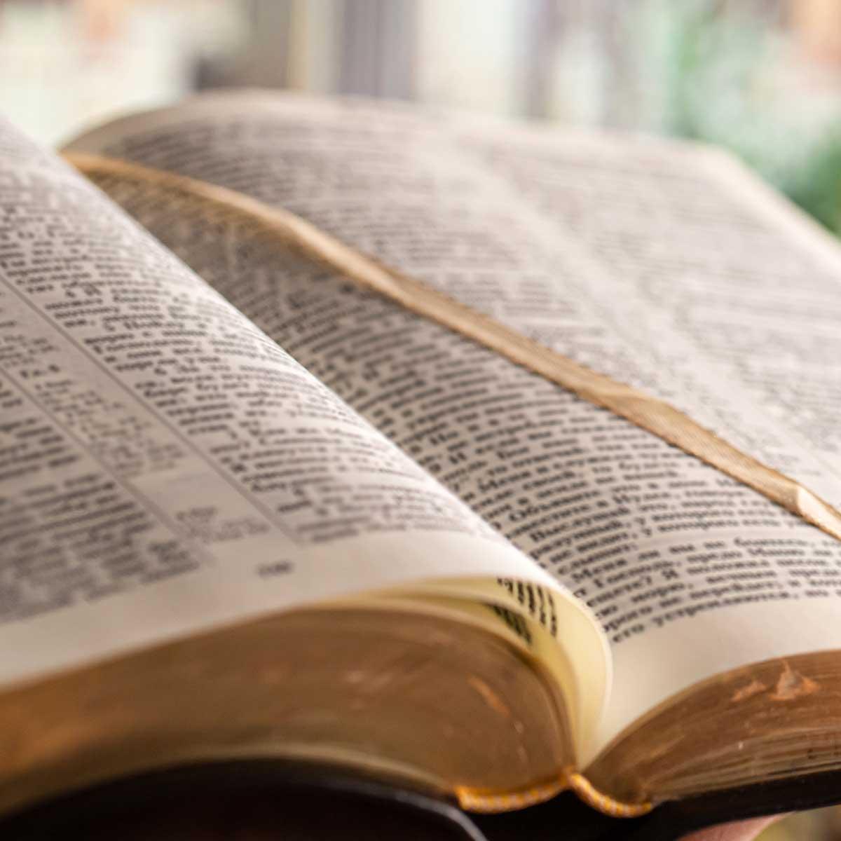 F4. Midrash as Literature