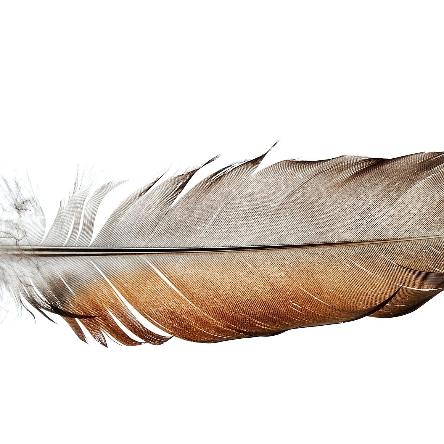 Ecology of Feathers
