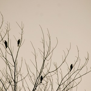 Square birds 923082 1920