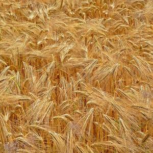 Square cereals 1473349 1920
