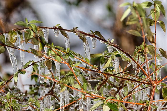 Sp 20180314 frozen harwood