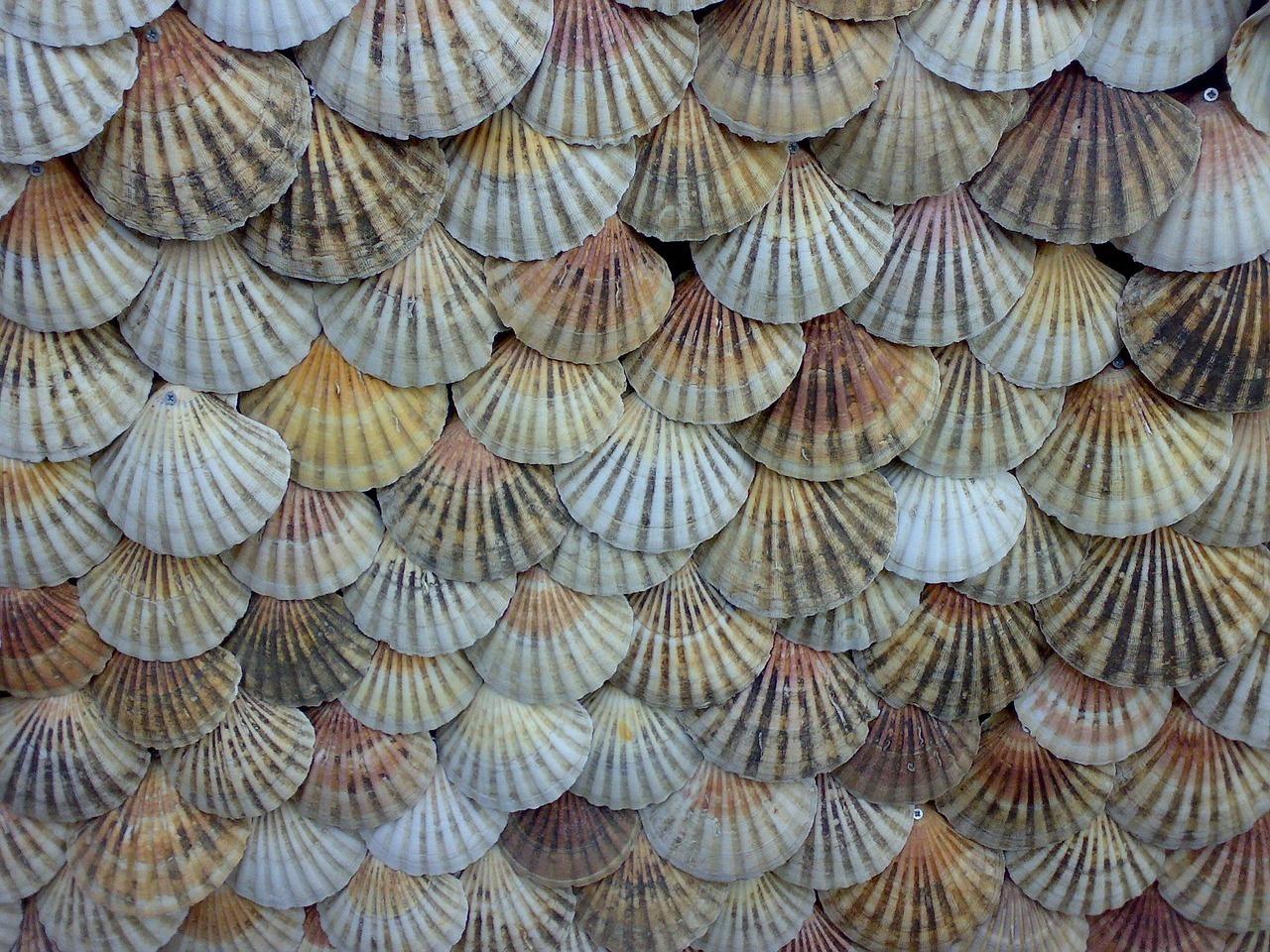 Shells 1009334 1280