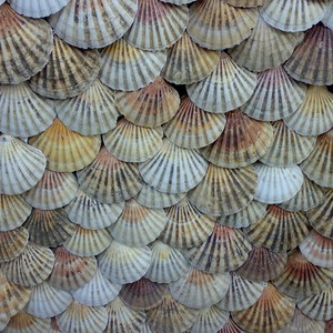 Square shells 1009334 1280