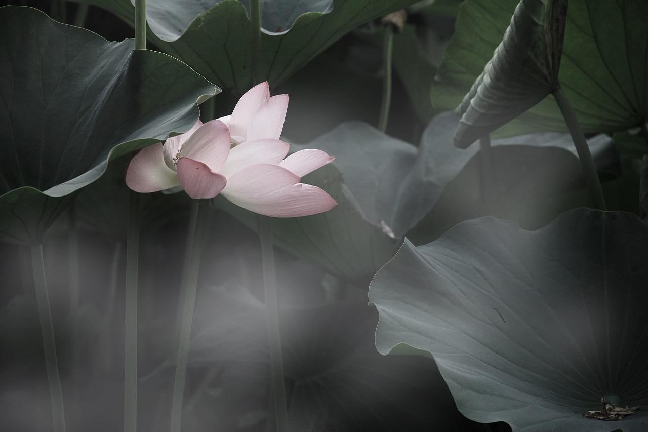 Lotus 814529 1280