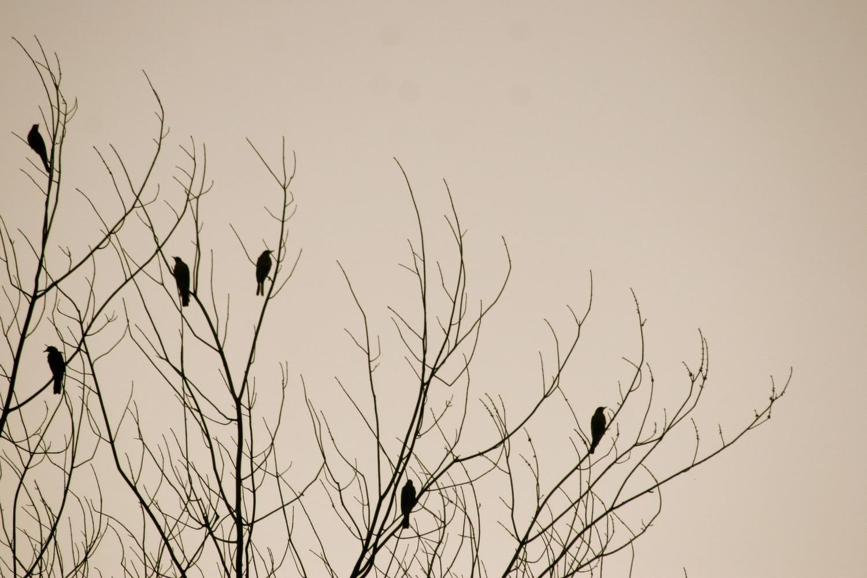 Birds 923082 1920