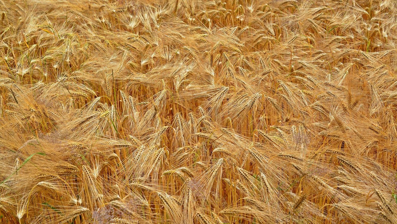 Cereals 1473349 1920