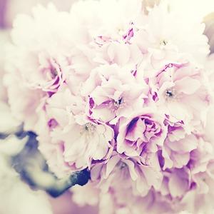 Square flowers bouquet 1031266 1920