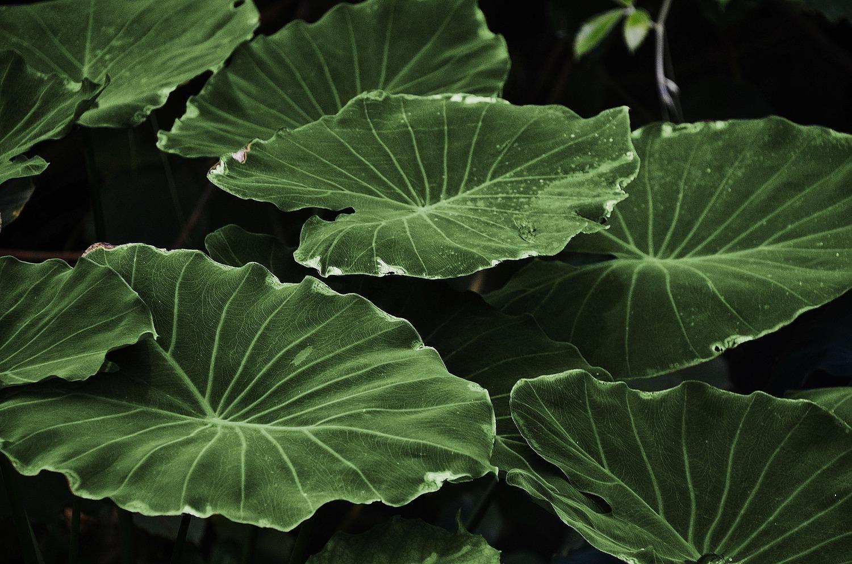 Leaf 318743 1920