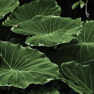 Square leaf 318743 1920