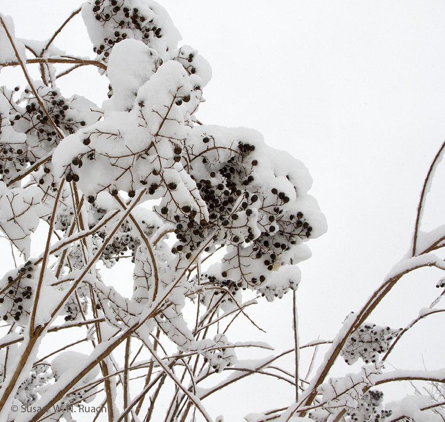 Sp 20180112 winter ruach