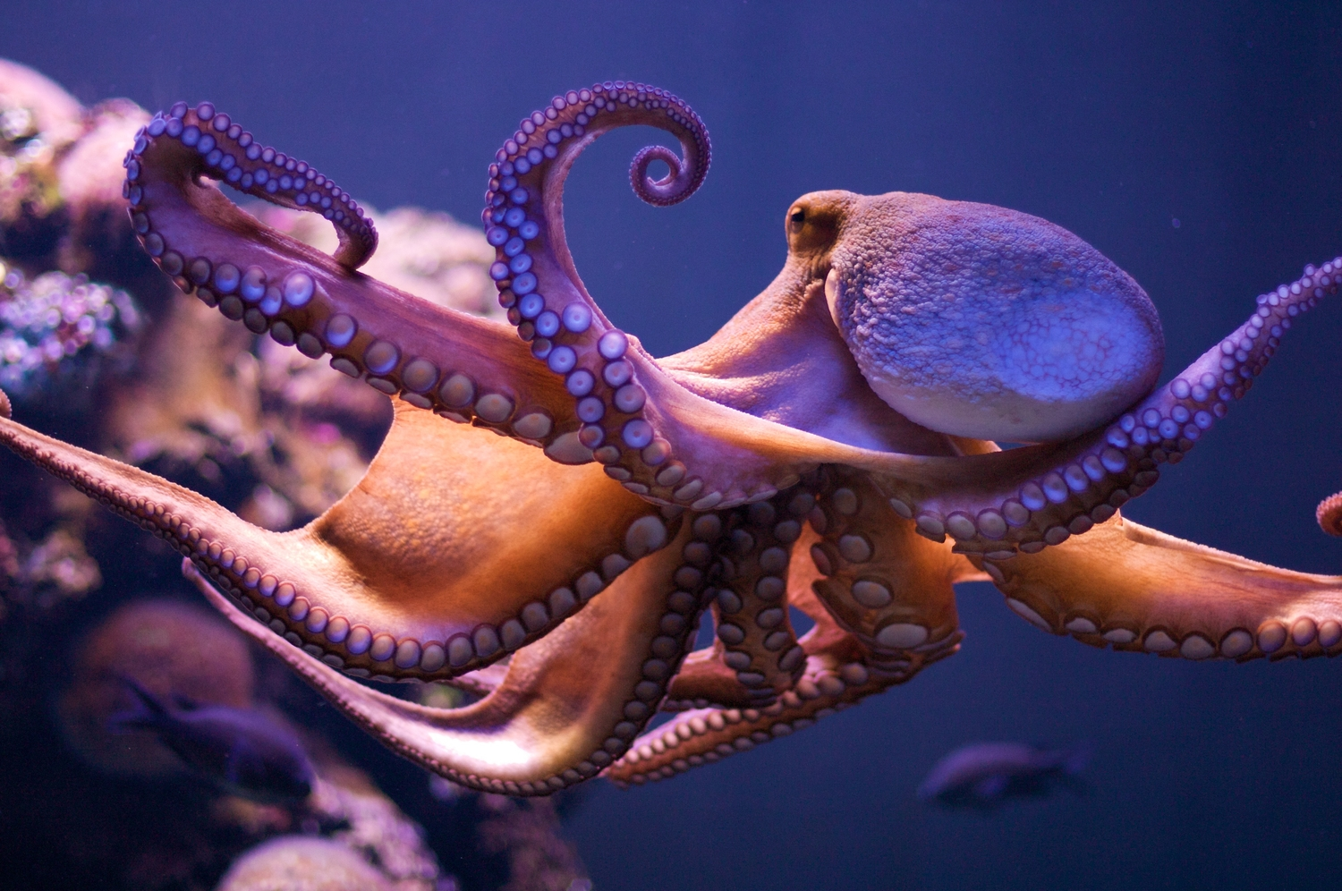 Octopus Skin Inspires Camouflage Tech