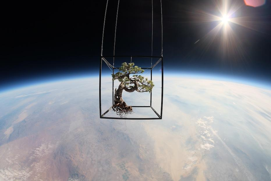 Why Did A Group Of Artists Just Put A Bonsai Tree In Space?