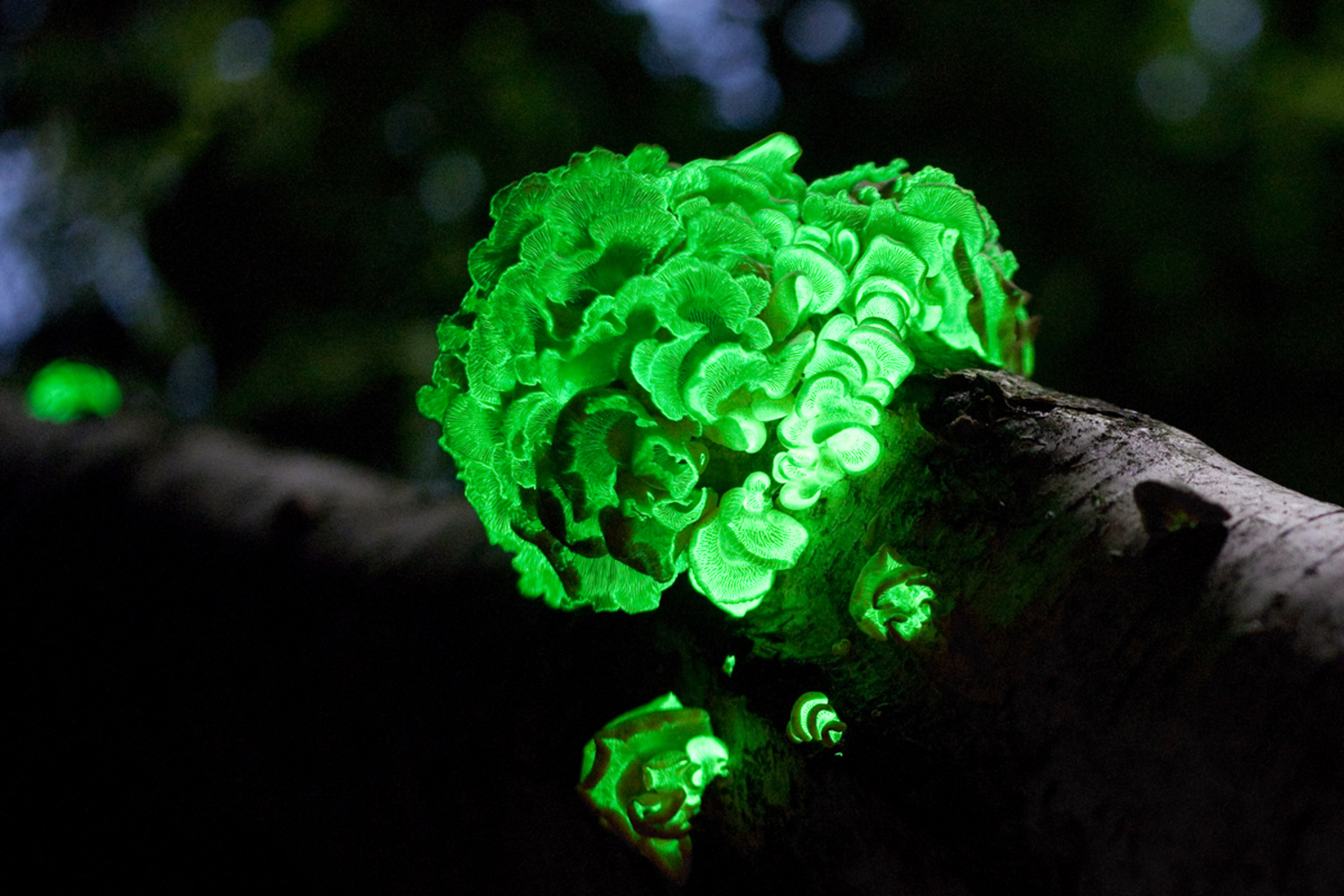 Startup Creating Avatar-like Glowing Plants Gets Yet More Funding