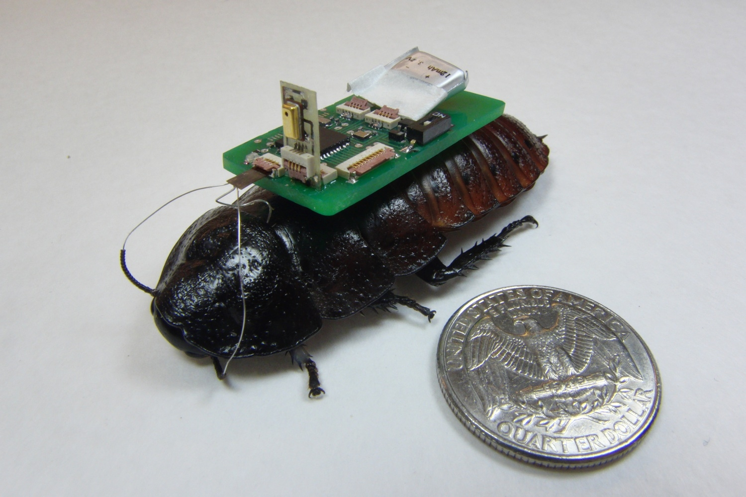 Why Are Scientists Building Cyborg Cockroaches?