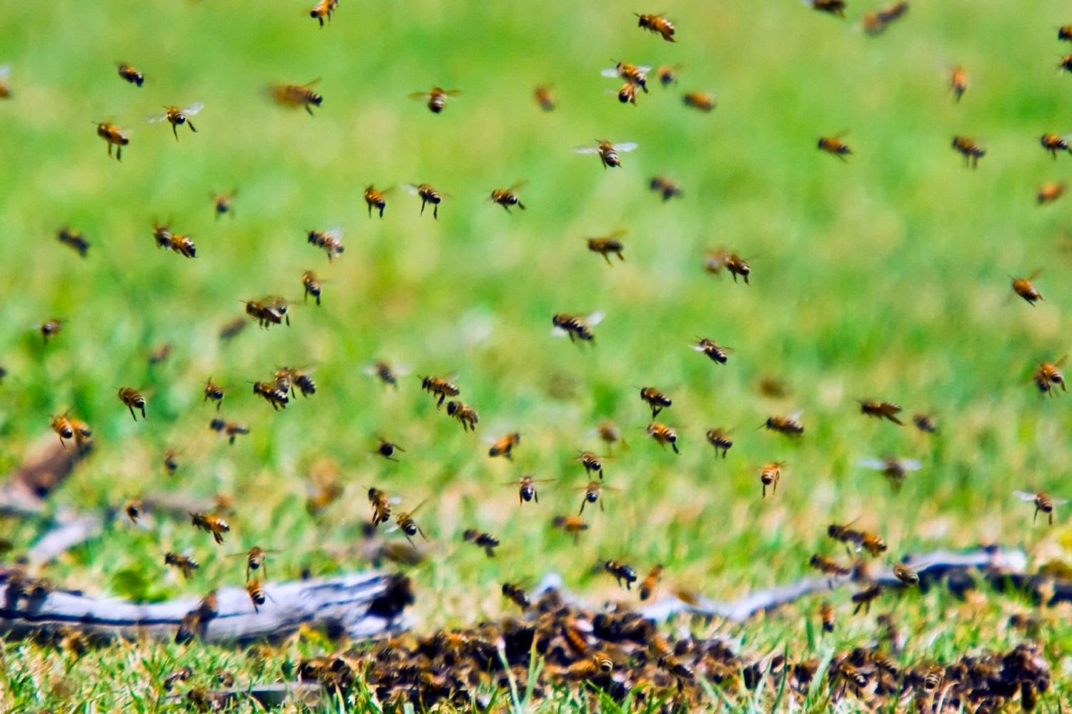 Swarm, the Bitcoin Crowdfunder Creating a Buzz