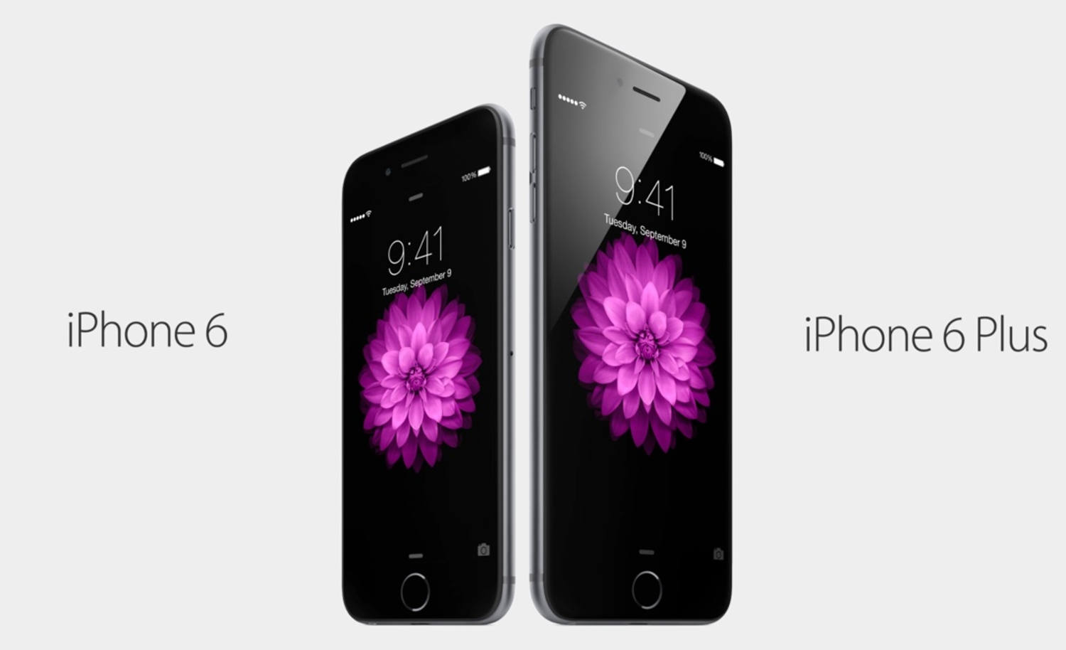 iPhone 6 Plus - Apple's Biggest iPhone Revealed!