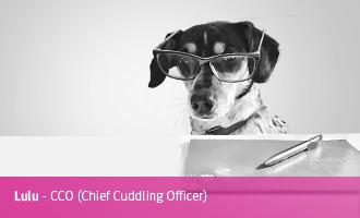 Lulu > CCO (Chief Cuddling Officer)
