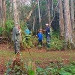 swamp walk 1