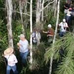 swamp walk 2