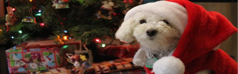 Christmas Assistance Sign Up (AKA Angel Tree) Image
