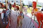 1947 allan herschell 3 row carousel horses4