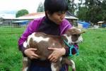 Medium_goat