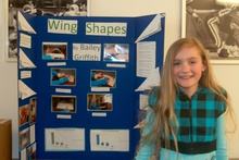 Wing shapes