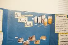 014 slvsef 2014 elementary candids