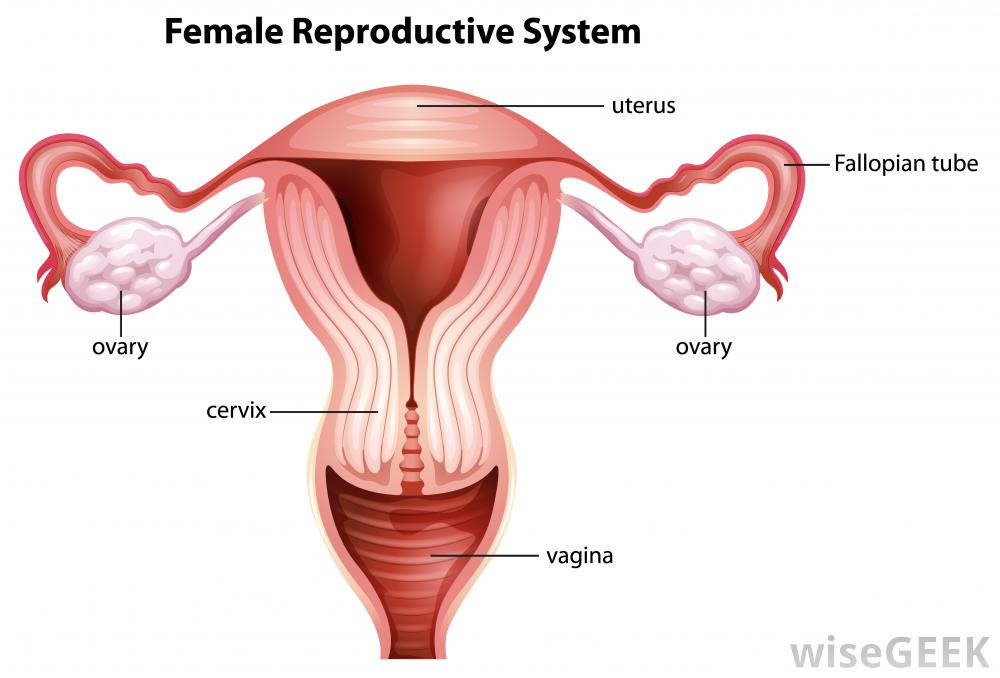 Ovaries and Testes- Bekah Bevan - by Bekah Bevan [Infographic]