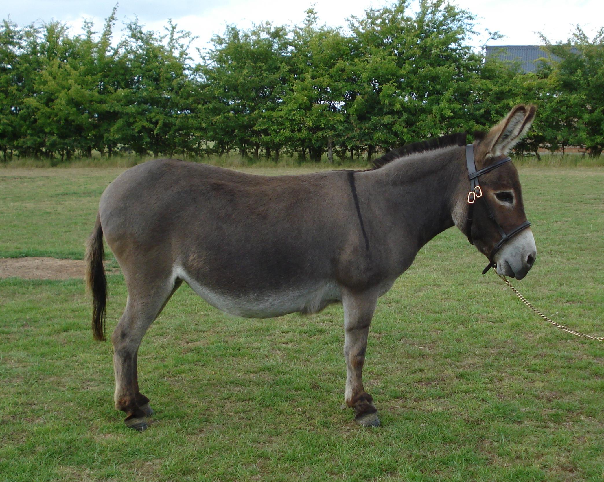the donkey by renske van steensel infographic