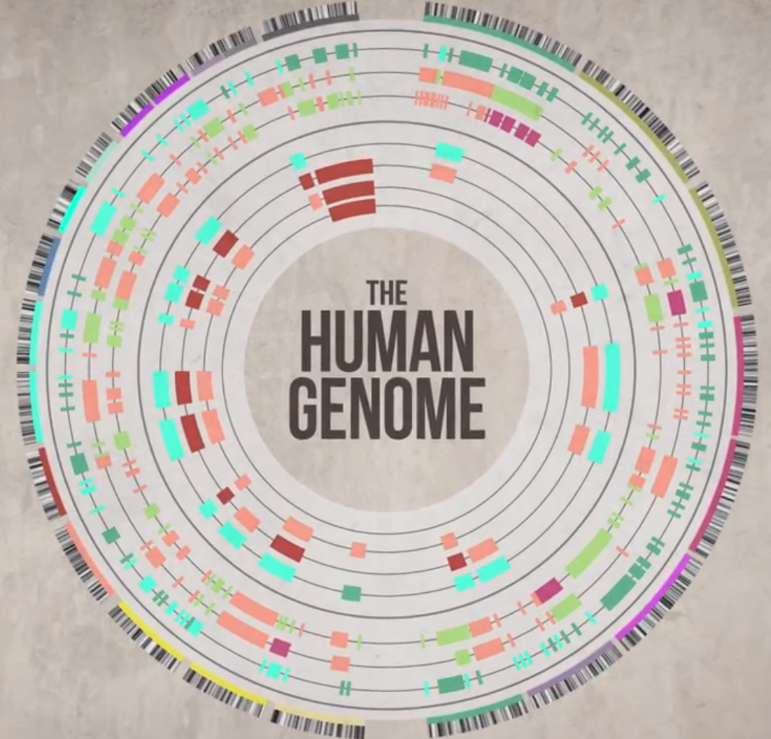 Human Genome Mapping Human Genome Project   by Mackenzie Rooks [Infographic]