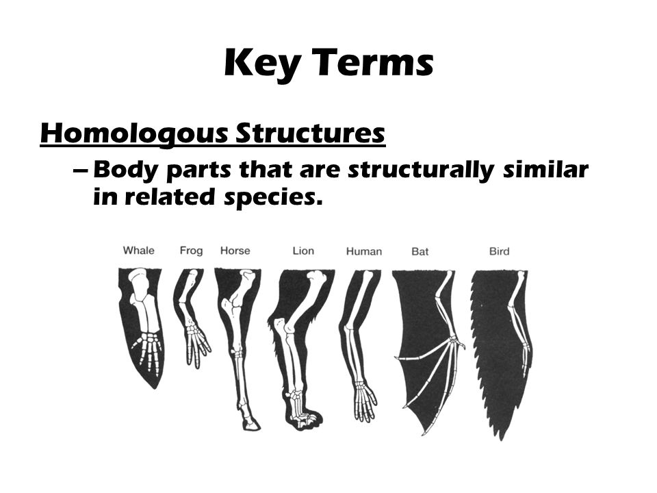 How do homologous structures support evolution?