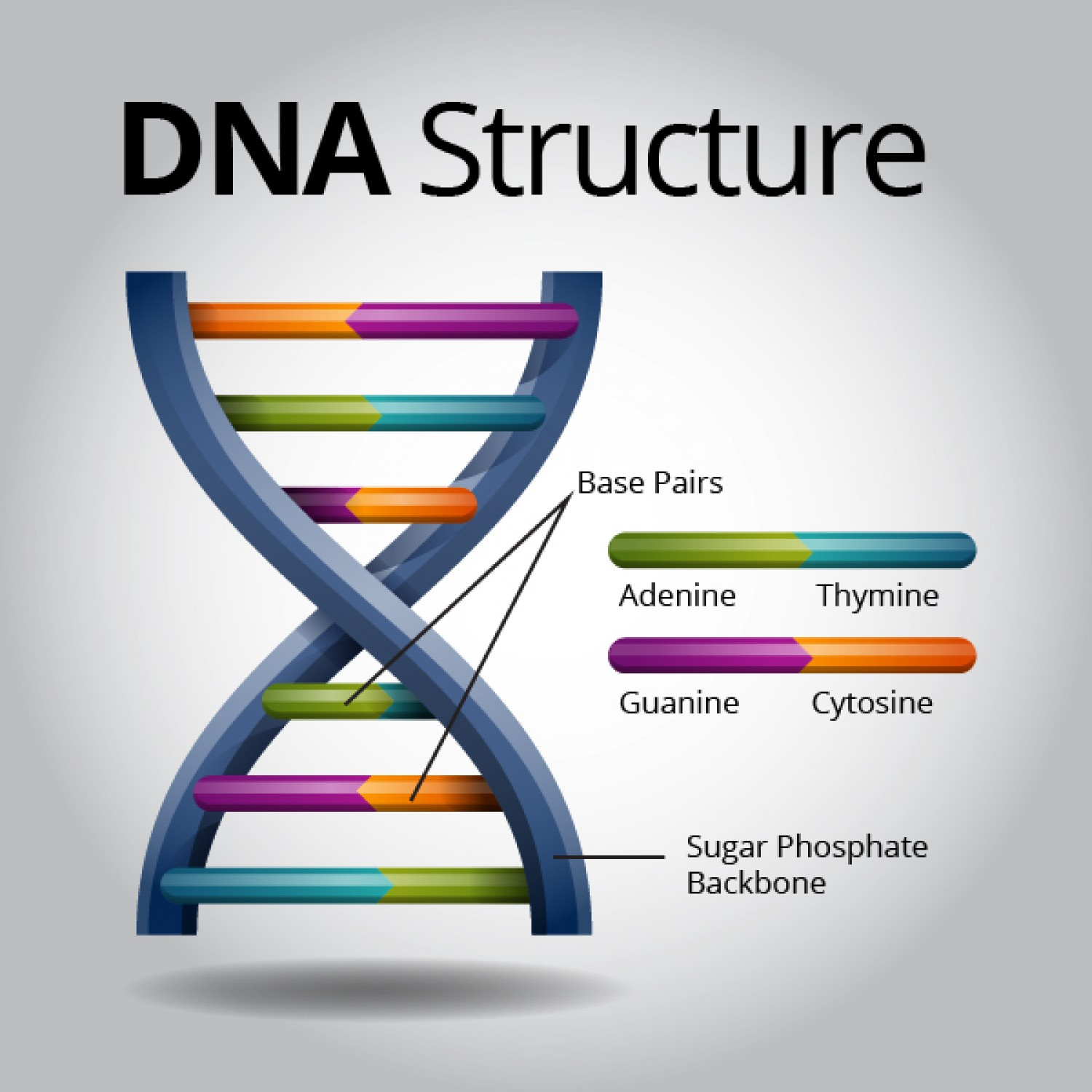 Dna history by jaron surtees infographic vocabulary ccuart Choice Image