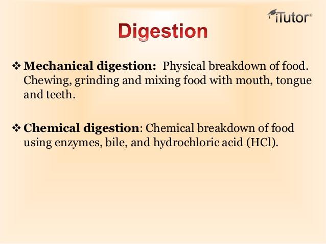 digestive system - by anika holur [infographic], Cephalic Vein