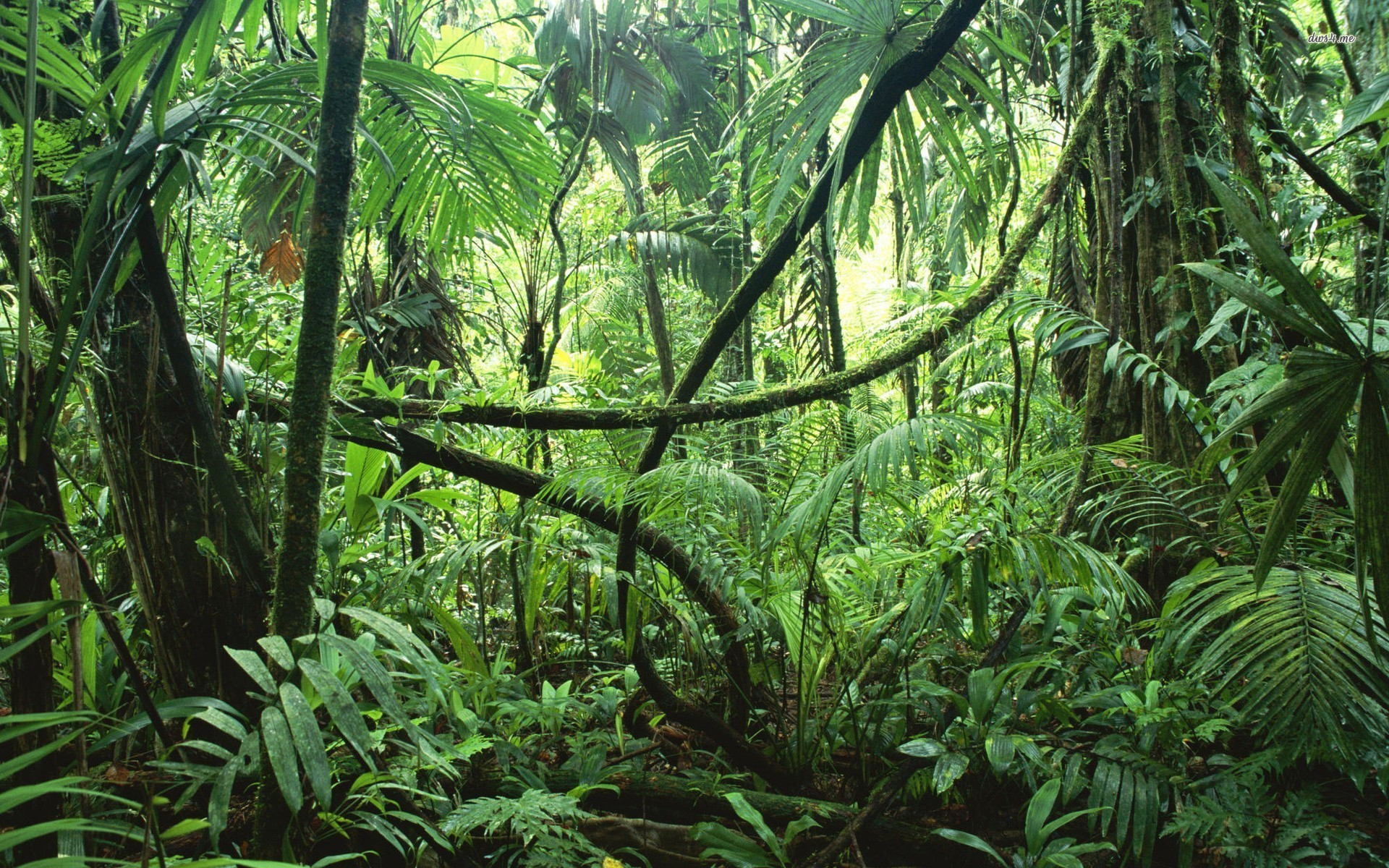 loss of biodiversity in rainforest by charity dunlevy todd