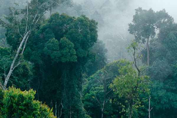 Loss of Biodiversity in Rainforest - by Charity Dunlevy-Todd ...
