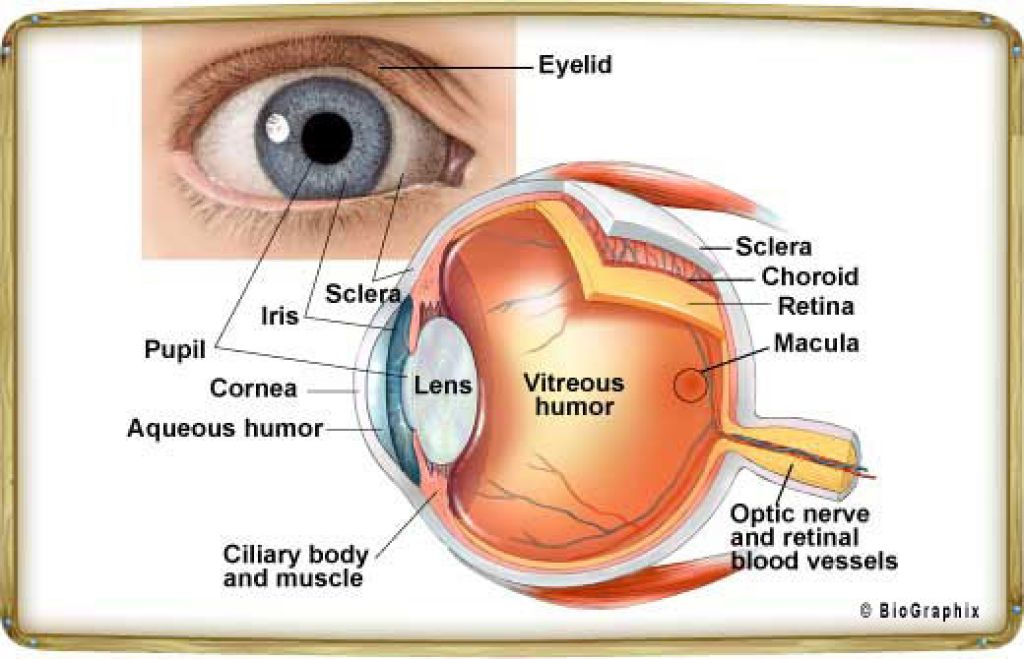 How The Human Eye Works Ibovnathandedecker