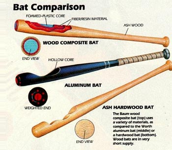 Evolution Of Bats By Tori Proctor Infographic