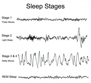 NREM- Stage 3: Muscles relax and blood pressure rate drops