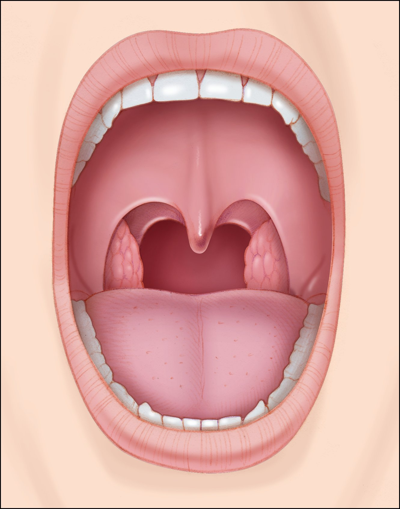 ORAL CAVITY - by Nisha Azhar [Infographic]