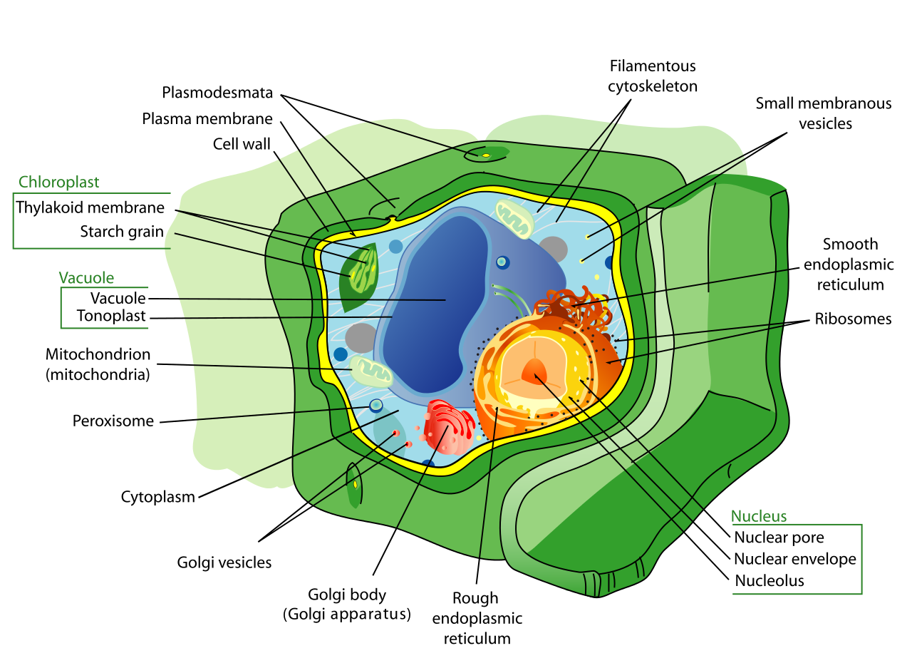 How cells differ by trevor benos infographic pooptronica