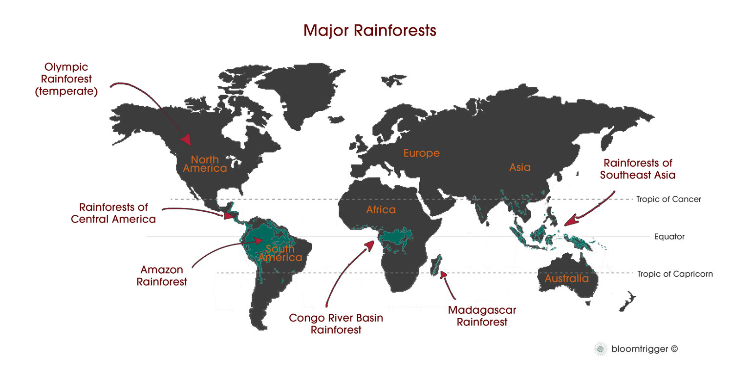 Rainforests by muskan khadka infographic sciox Gallery
