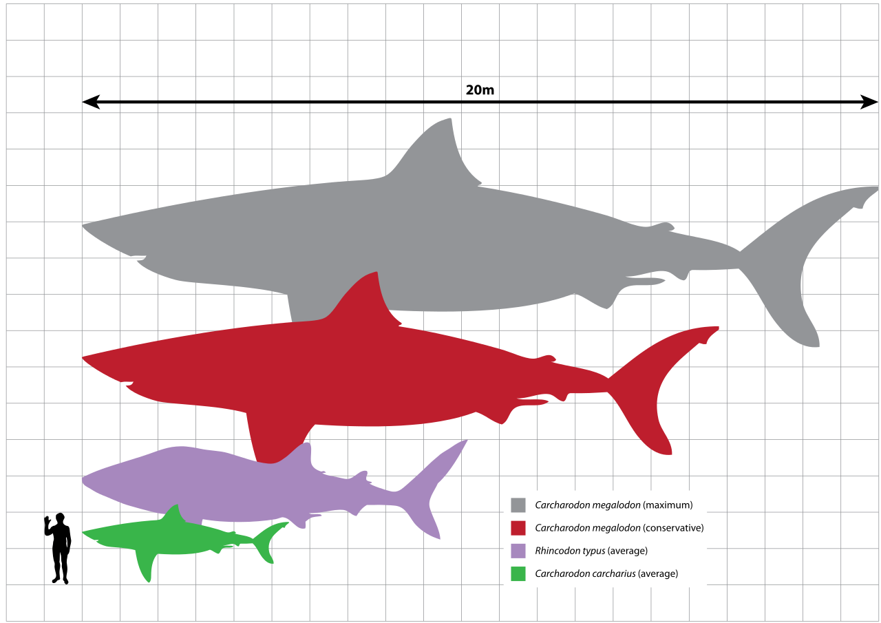Bull Shark Diagram Inside Wiring Diagram