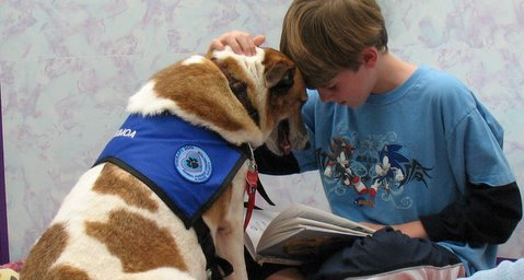 Image result for animal therapy