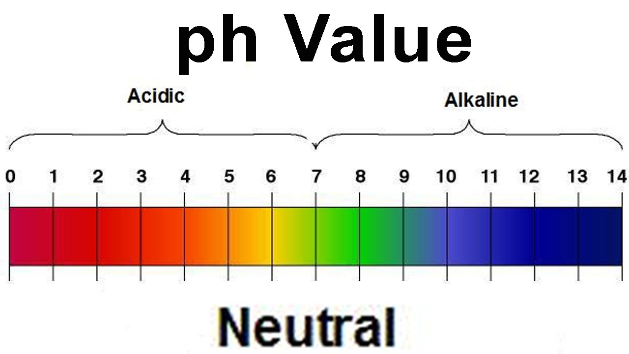 Acid Base RD - by RESE DIXON [Infographic] for Ph Scale Acids And Bases  181pct