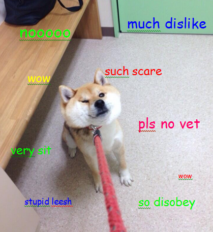 how the doge meme spread by syed samin siam infographic