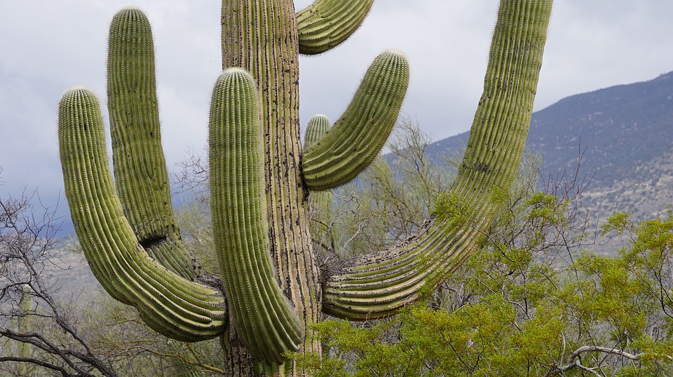 cactus by michael kell infographic