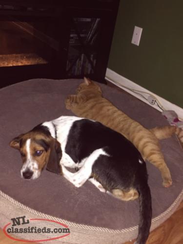 My Beagle Sleeps In My Bed
