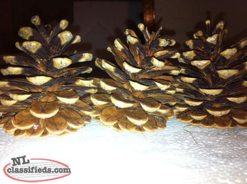 Large Pine Cones -Great for Xmas Crafts - $3 a bag