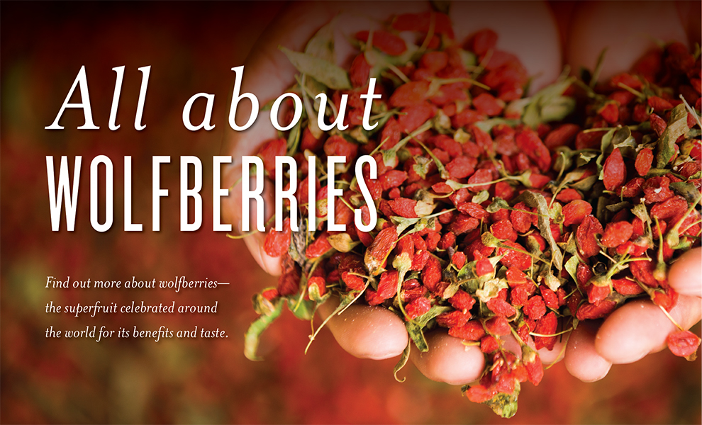 All about Wolfberry